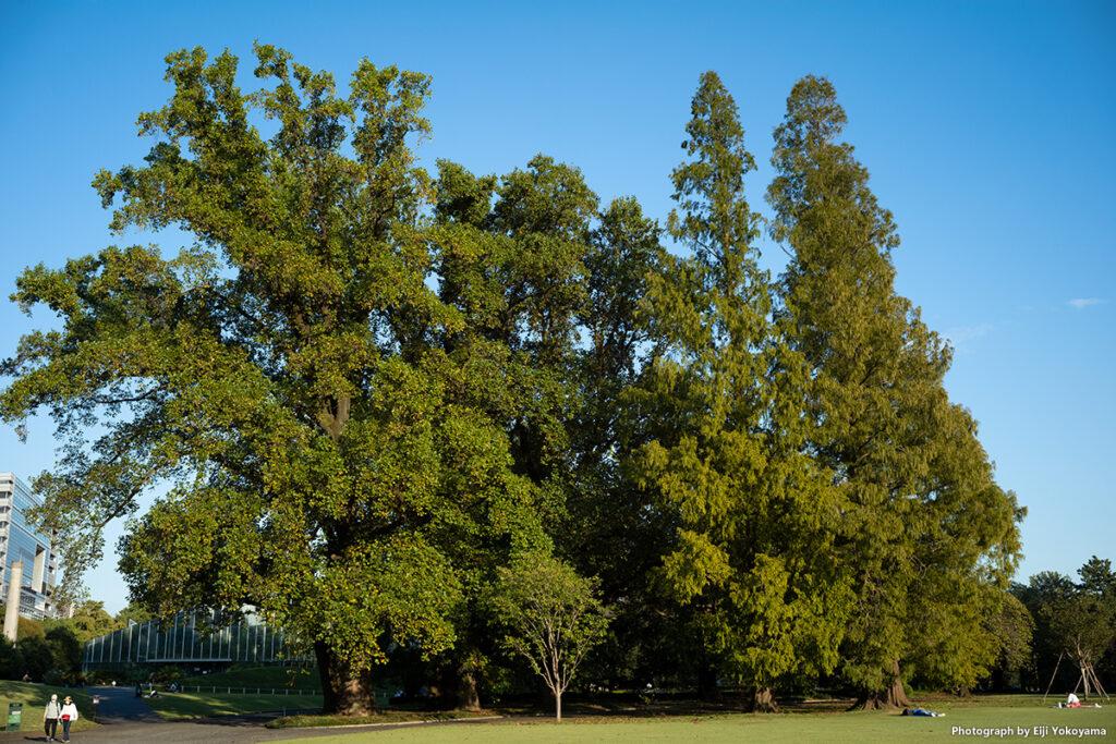 新宿御苑:Leica M10-R, F8, 1/250, ISO250