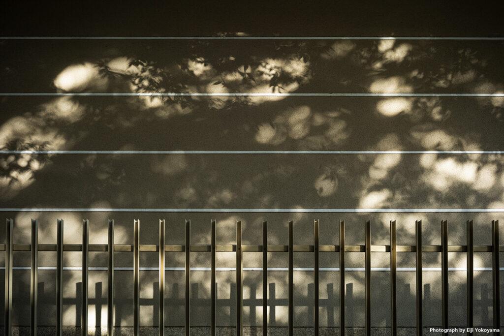 上野公園。Leica M10-R + LIGHT LENS LAB M 35mm f/2(周八枚)